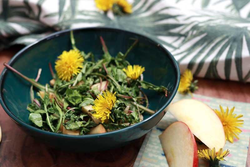 loewenzahnsalat-wildkraut-kraeuterzimmer