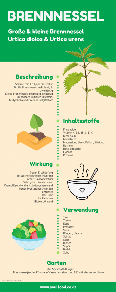 Brennnessel Infografik