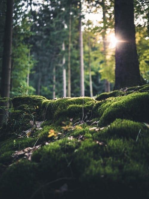 Moos-Wald