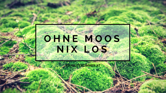 Moos, moss, kräuterzimmer, blog, Natur